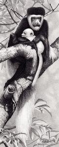 Kutokua_Na_Hatia_(Colobus_Monkey)