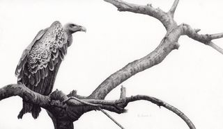 Custodian_(Ruppell's_Vulture)
